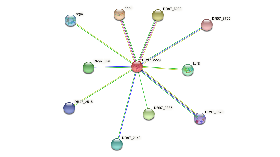 DR97_2229 protein (Pseudomonas aeruginosa) - STRING interaction network