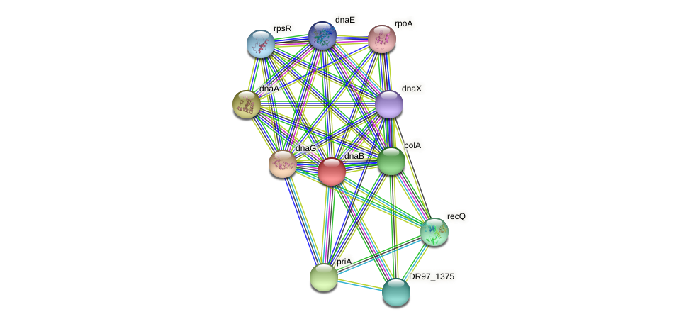 dnaB1 protein (Pseudomonas aeruginosa) - STRING interaction network