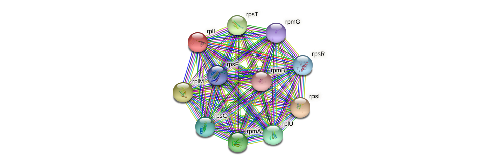 rplI protein (Pseudomonas aeruginosa) - STRING interaction network