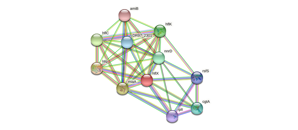 hflX protein (Pseudomonas aeruginosa) - STRING interaction network