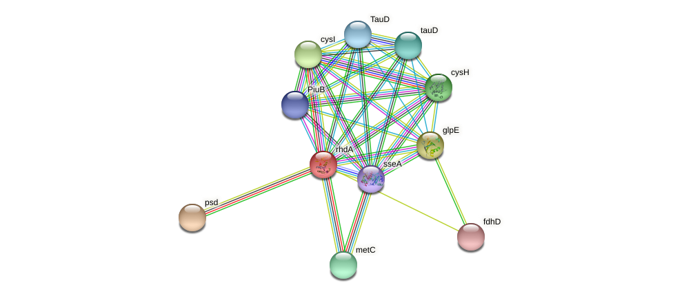 rhdA protein (Pseudomonas aeruginosa) - STRING interaction network
