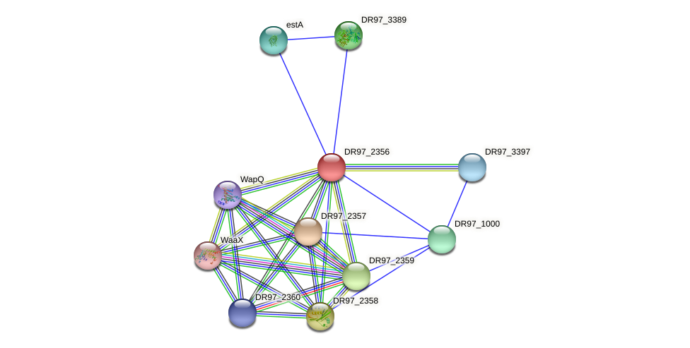 DR97_2356 protein (Pseudomonas aeruginosa) - STRING interaction network