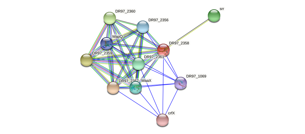 DR97_2358 protein (Pseudomonas aeruginosa) - STRING interaction network