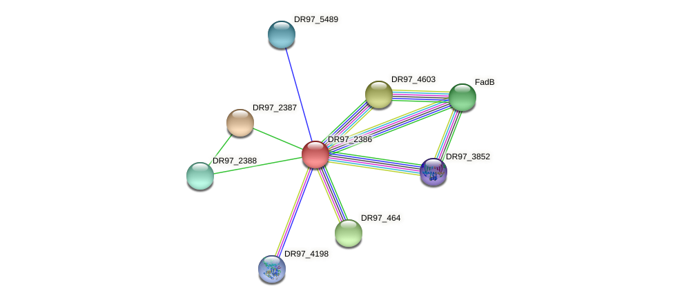 DR97_2386 protein (Pseudomonas aeruginosa) - STRING interaction network