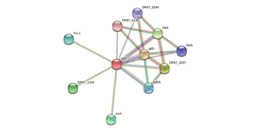 gltB protein (Pseudomonas aeruginosa) - STRING interaction network