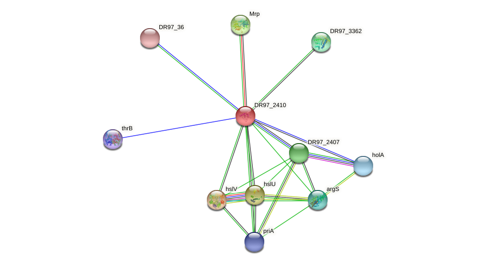 DR97_2410 protein (Pseudomonas aeruginosa) - STRING interaction network