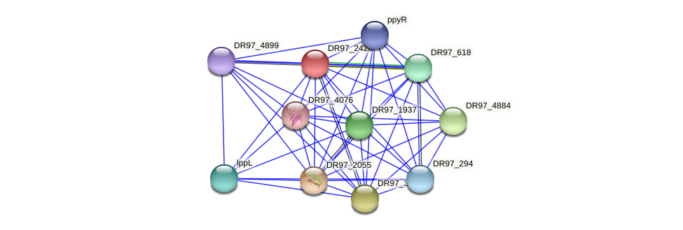 DR97_2428 protein (Pseudomonas aeruginosa) - STRING interaction network
