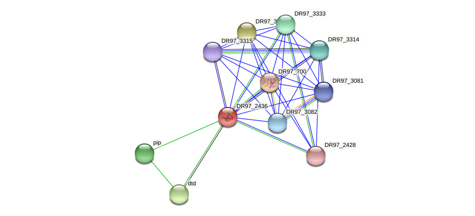 DR97_2436 protein (Pseudomonas aeruginosa) - STRING interaction network