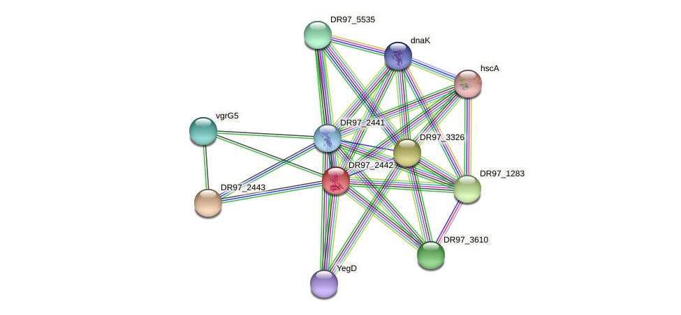 DR97_2442 protein (Pseudomonas aeruginosa) - STRING interaction network