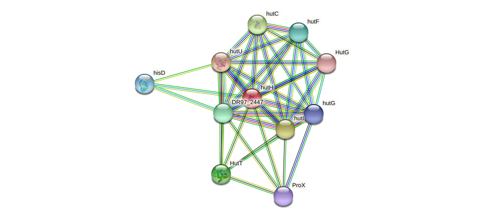 hutH protein (Pseudomonas aeruginosa) - STRING interaction network