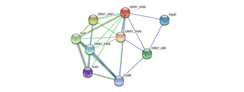 DR97_2455 protein (Pseudomonas aeruginosa) - STRING interaction network