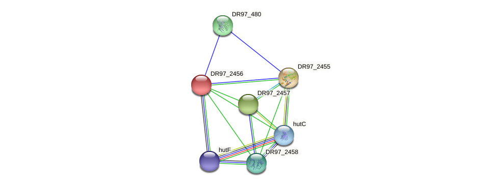 DR97_2456 protein (Pseudomonas aeruginosa) - STRING interaction network