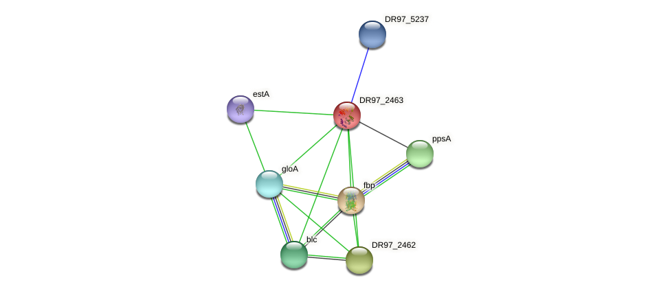 DR97_2463 protein (Pseudomonas aeruginosa) - STRING interaction network