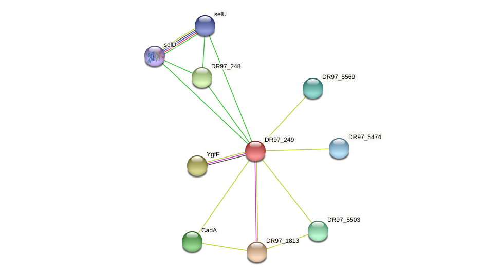 DR97_249 protein (Pseudomonas aeruginosa) - STRING interaction network