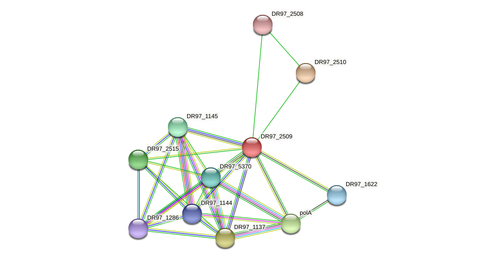 DR97_2509 protein (Pseudomonas aeruginosa) - STRING interaction network