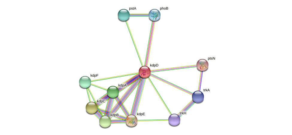 kdpD protein (Pseudomonas aeruginosa) - STRING interaction network