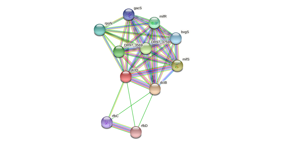dctD1 protein (Pseudomonas aeruginosa) - STRING interaction network