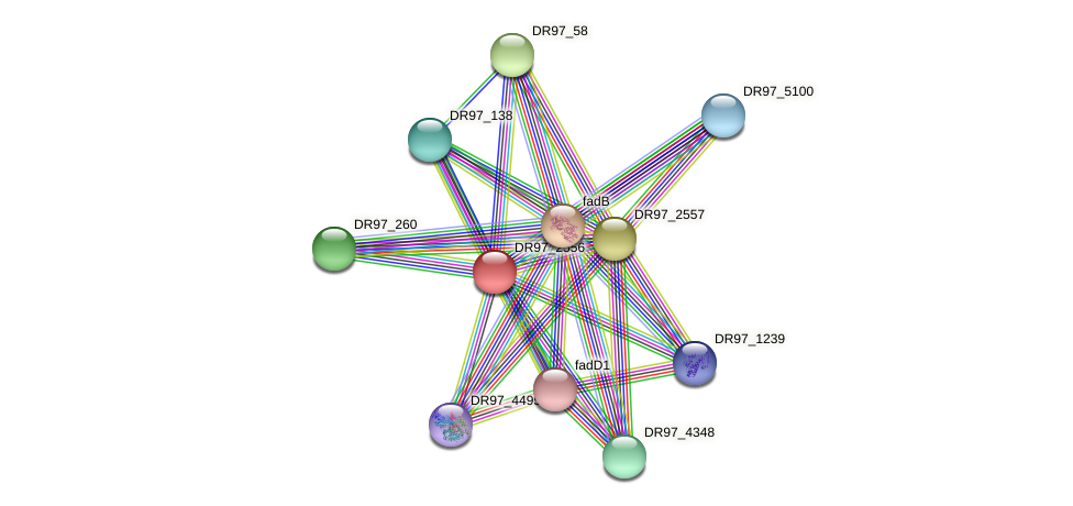 DR97_2556 protein (Pseudomonas aeruginosa) - STRING interaction network