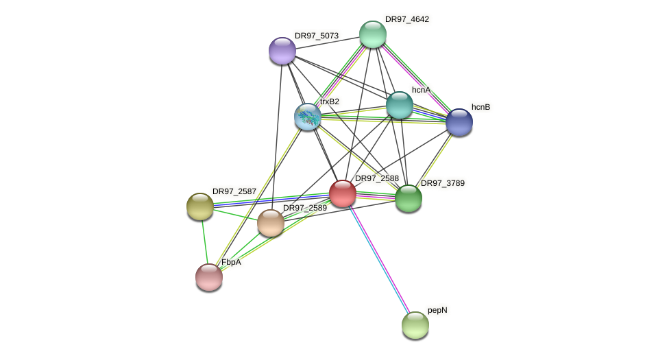 DR97_2588 protein (Pseudomonas aeruginosa) - STRING interaction network