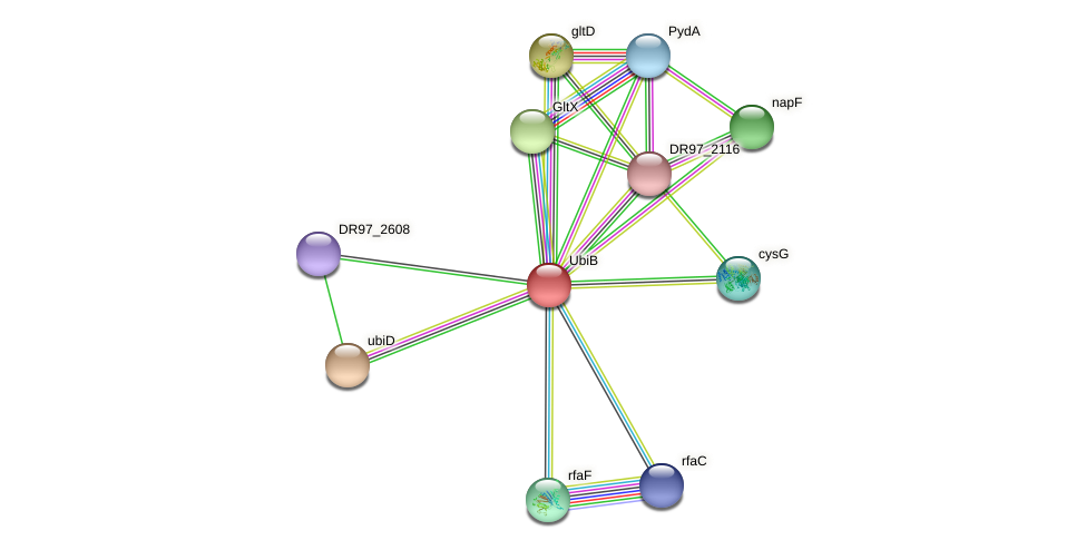 DR97_2606 protein (Pseudomonas aeruginosa) - STRING interaction network