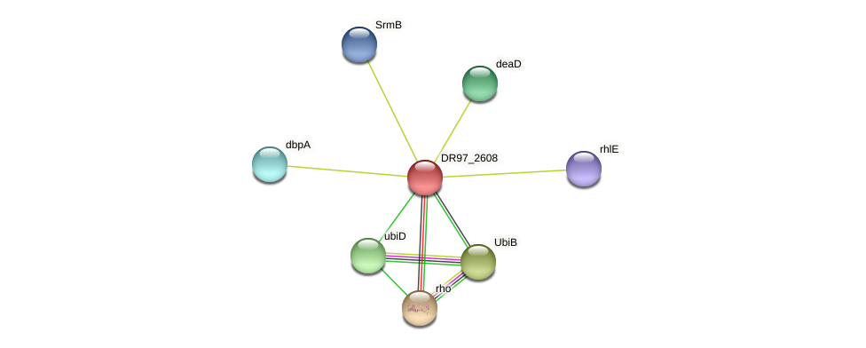 DR97_2608 protein (Pseudomonas aeruginosa) - STRING interaction network