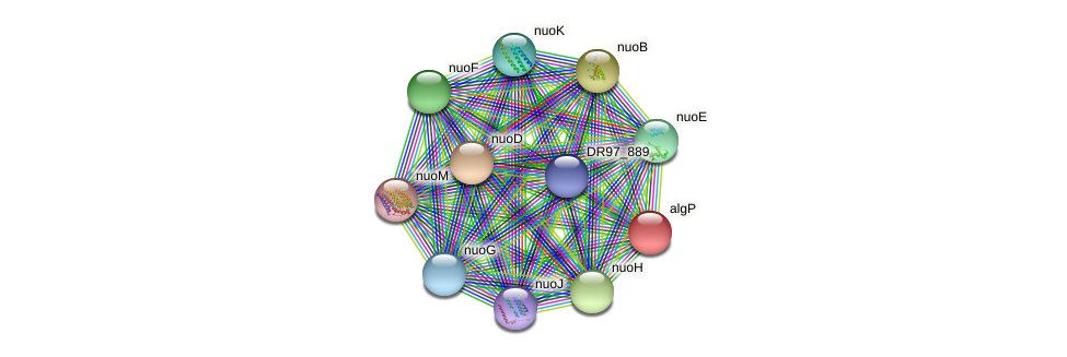 algP protein (Pseudomonas aeruginosa) - STRING interaction network