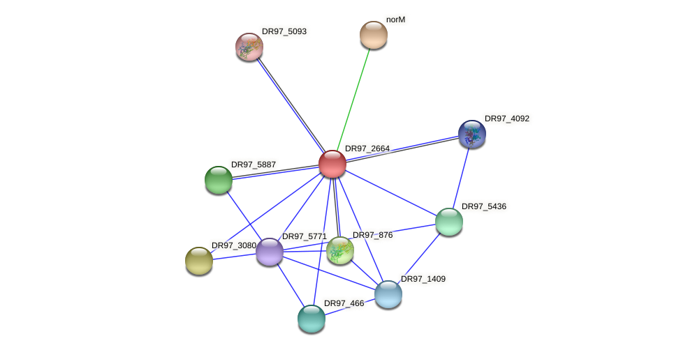 DR97_2664 protein (Pseudomonas aeruginosa) - STRING interaction network