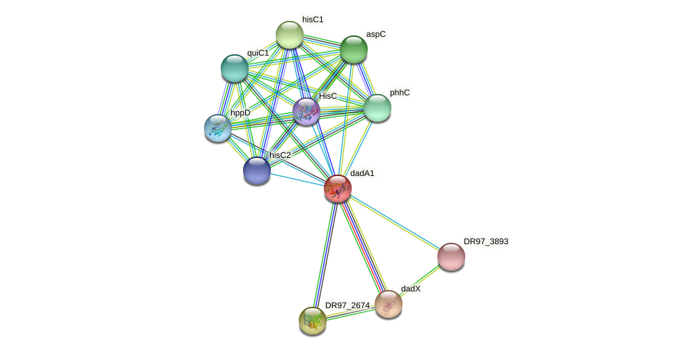 dadA1 protein (Pseudomonas aeruginosa) - STRING interaction network