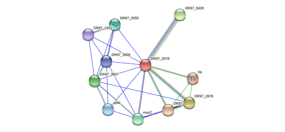 DR97_2678 protein (Pseudomonas aeruginosa) - STRING interaction network