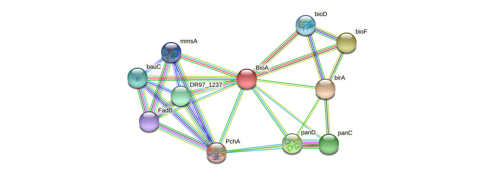 DR97_2684 protein (Pseudomonas aeruginosa) - STRING interaction network