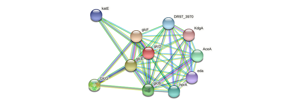 glcD protein (Pseudomonas aeruginosa) - STRING interaction network