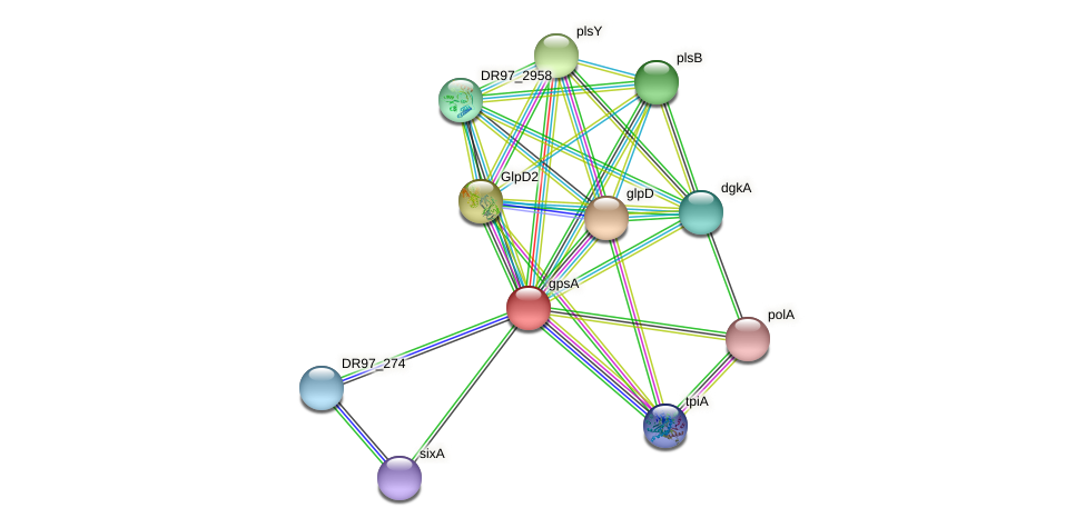 gpsA protein (Pseudomonas aeruginosa) - STRING interaction network