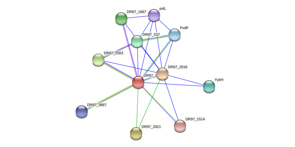 DR97_2820 protein (Pseudomonas aeruginosa) - STRING interaction network