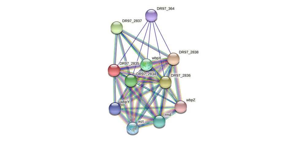 DR97_2835 protein (Pseudomonas aeruginosa) - STRING interaction network