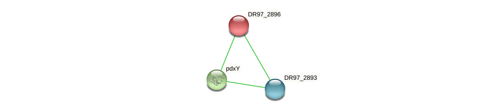 DR97_2896 protein (Pseudomonas aeruginosa) - STRING interaction network