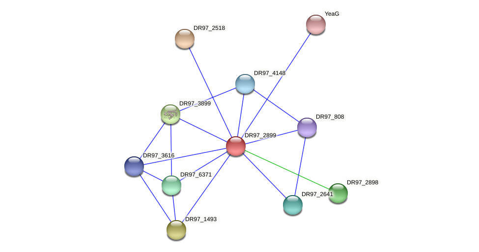 DR97_2899 protein (Pseudomonas aeruginosa) - STRING interaction network