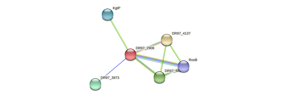 DR97_2908 protein (Pseudomonas aeruginosa) - STRING interaction network