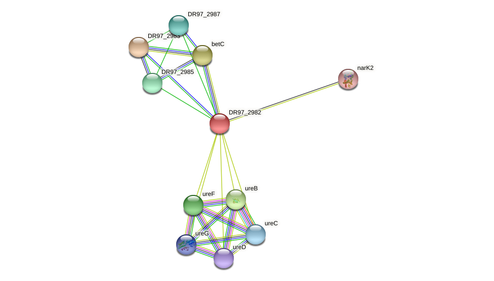 DR97_2982 protein (Pseudomonas aeruginosa) - STRING interaction network