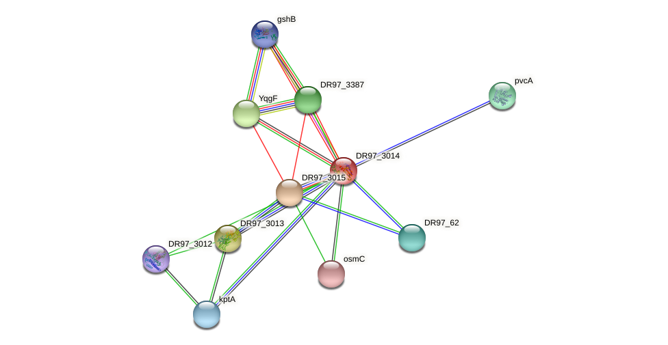 DR97_3014 protein (Pseudomonas aeruginosa) - STRING interaction network