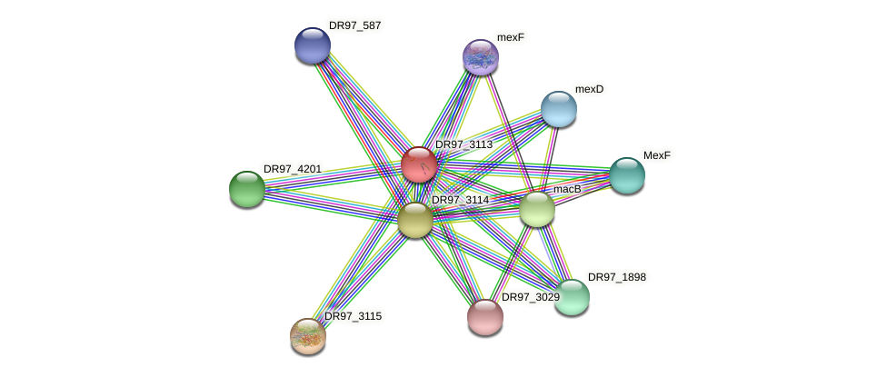 DR97_3113 protein (Pseudomonas aeruginosa) - STRING interaction network