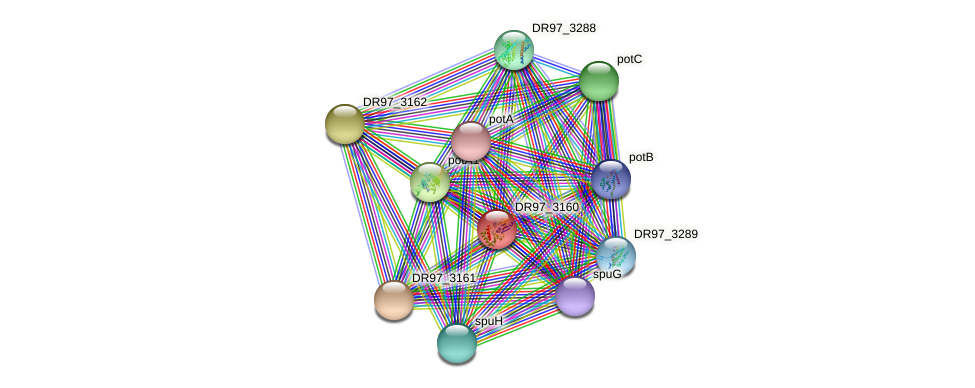 DR97_3160 protein (Pseudomonas aeruginosa) - STRING interaction network