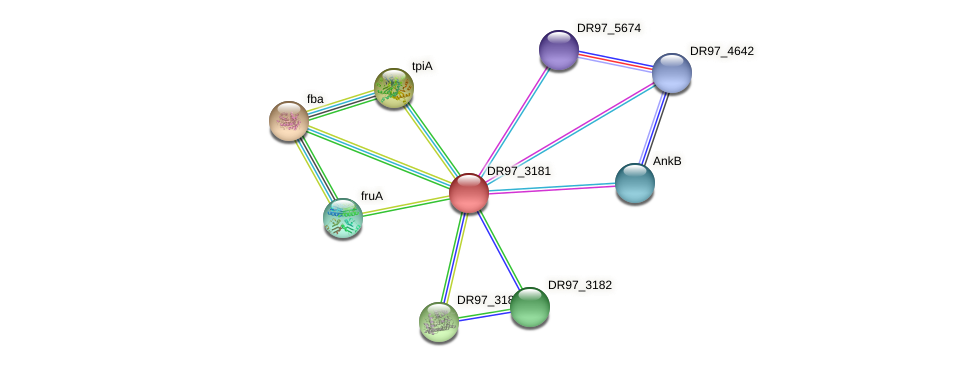 DR97_3181 protein (Pseudomonas aeruginosa) - STRING interaction network