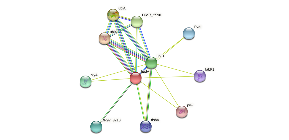 DR97_3211 protein (Pseudomonas aeruginosa) - STRING interaction network