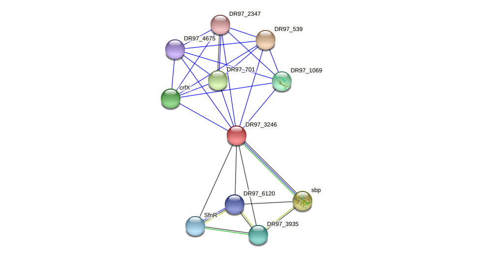 DR97_3246 protein (Pseudomonas aeruginosa) - STRING interaction network