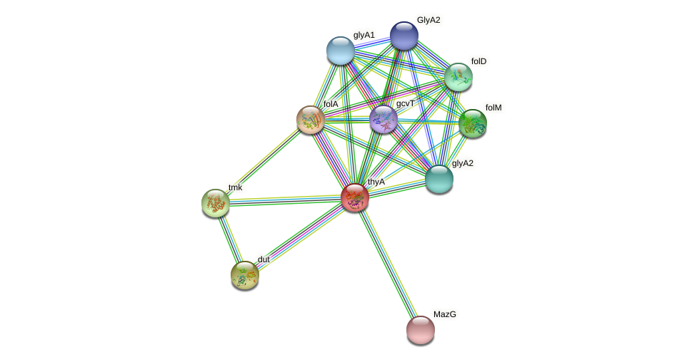 thyA protein (Pseudomonas aeruginosa) - STRING interaction network