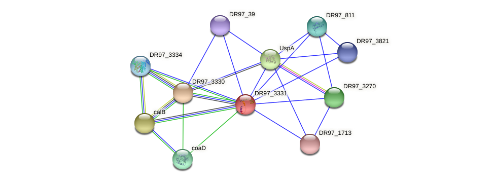 DR97_3331 protein (Pseudomonas aeruginosa) - STRING interaction network