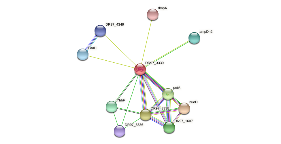 DR97_3339 protein (Pseudomonas aeruginosa) - STRING interaction network
