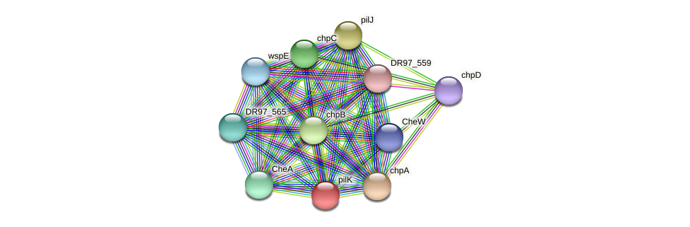 pilK protein (Pseudomonas aeruginosa) - STRING interaction network
