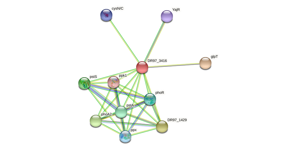 DR97_3416 protein (Pseudomonas aeruginosa) - STRING interaction network