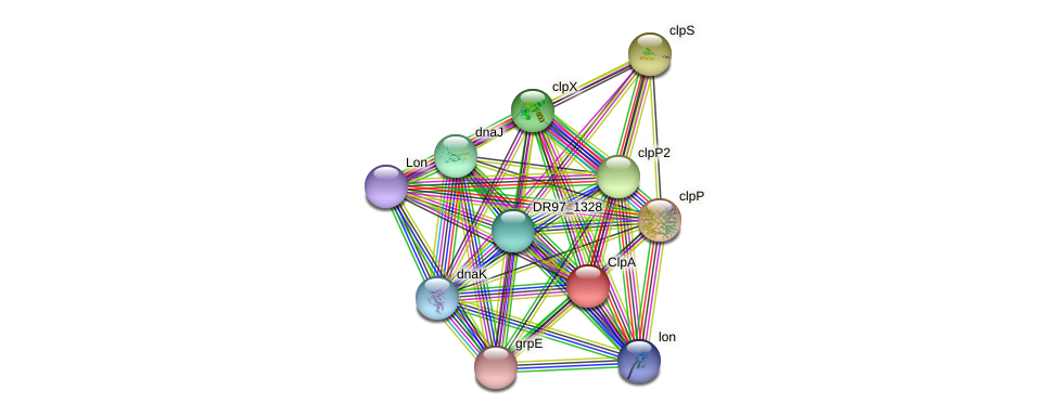 clpB1 protein (Pseudomonas aeruginosa) - STRING interaction network